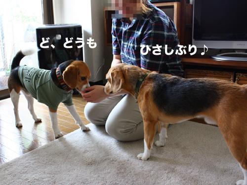 20110607くらちゃん2.jpg
