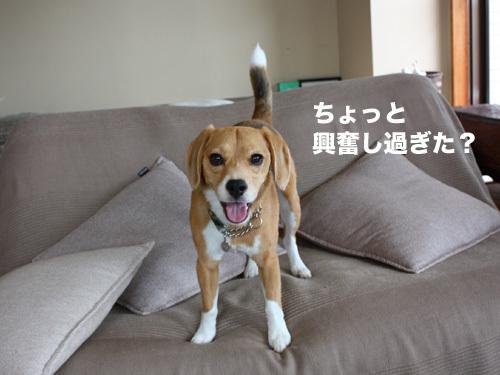 20110607くらちゃん4.jpg
