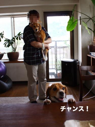 20110607くらちゃん6.jpg