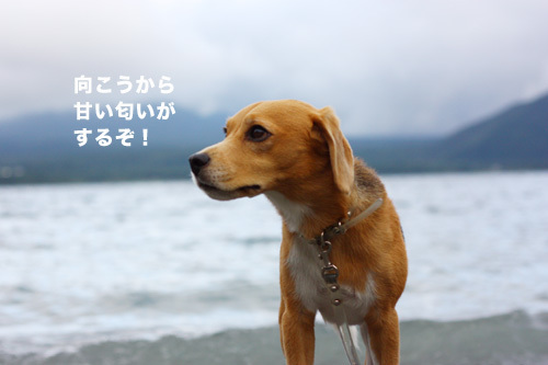 20110827本栖湖キャンプ34.jpg