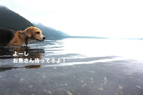 20110827本栖湖キャンプ47.jpg