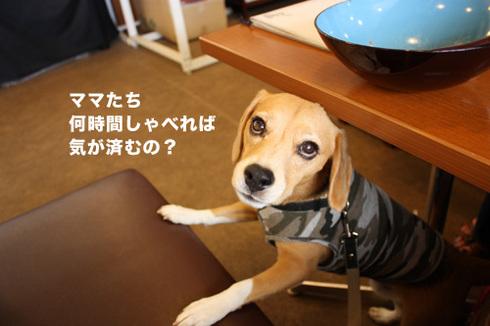 20110912プーちゃん8.jpg