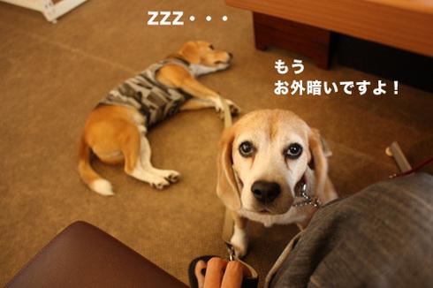 20110912プーちゃん9.jpg