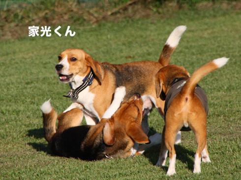 20110918朝霧オフ会14.jpg