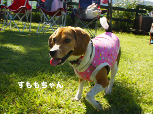 20110918朝霧オフ会21.jpg