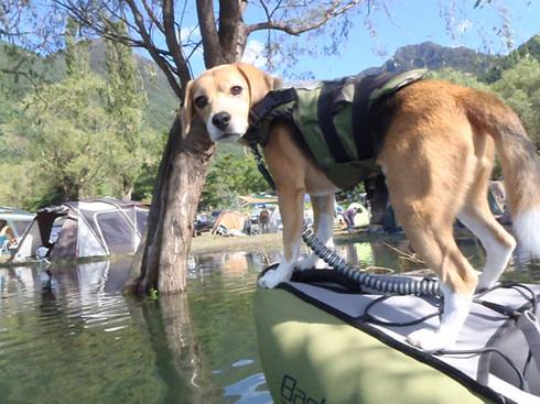 20110923西湖水没キャンプ27.jpg