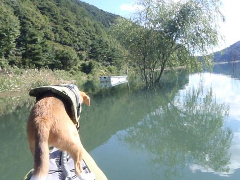 20110923西湖水没キャンプ33.jpg