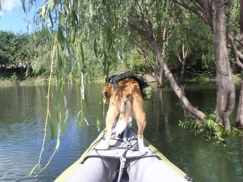20110923西湖水没キャンプ40.jpg