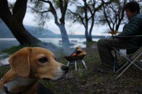 20110923西湖水没キャンプ64.jpg