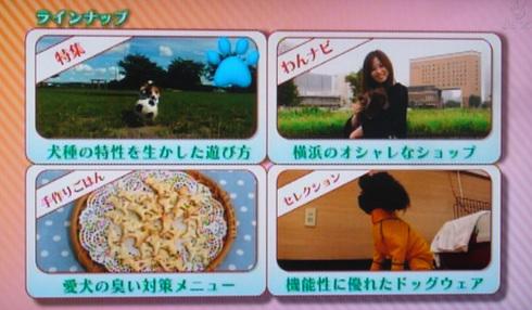 20111001うちのわんこ2.jpg