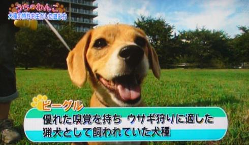 20111001うちのわんこ5.jpg