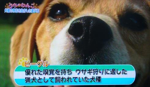 20111001うちのわんこ6.jpg