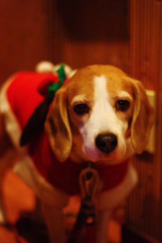 20111203クリスマス旅行27.jpg