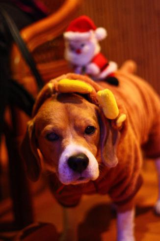 20111203クリスマス旅行28.jpg