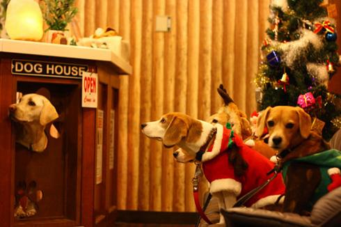 20111203クリスマス旅行37.jpg