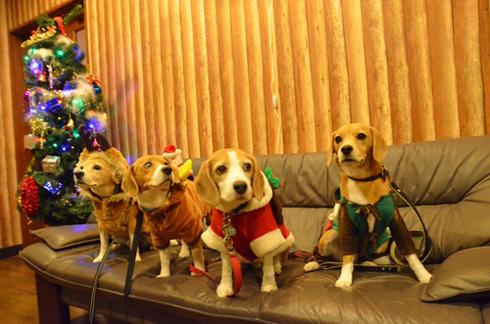 20111203クリスマス旅行38.jpg