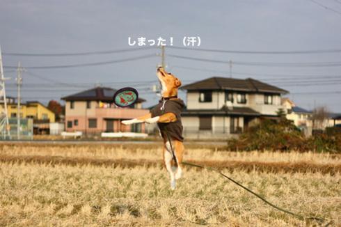 20120102パパ実家10.jpg