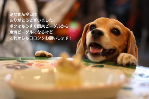 20120415サヨナラ関東44.jpg