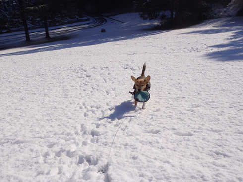 210120124雪あそび3.jpg