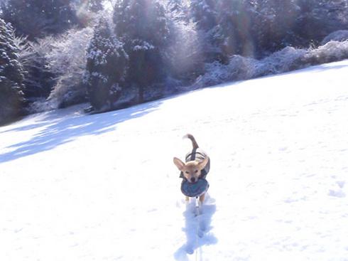 210120124雪あそび5.jpg